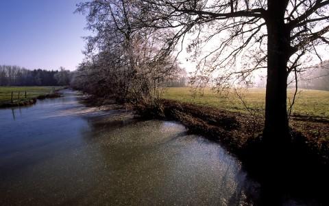 Bras d'eau gelé au matin, Alsace