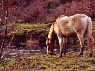 Cheval au bord de l'eau, Jura