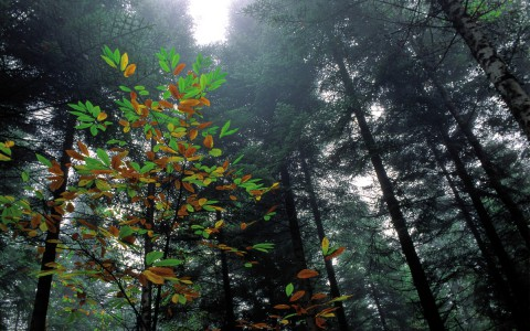 Couleurs dans la brume, Dordogne