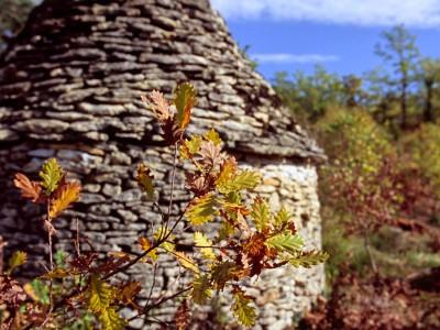 Feuilles de chêne et borie, Dordogne