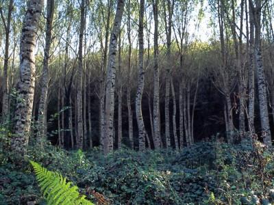 Fougères et boulots, Dordogne