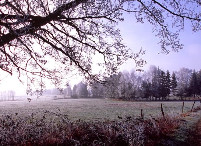 Gel matinal sur le Sundgau, Alsace