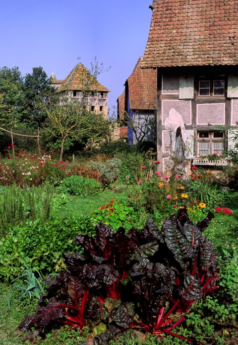 Potager luxuriant, Ecomusée, Alsace