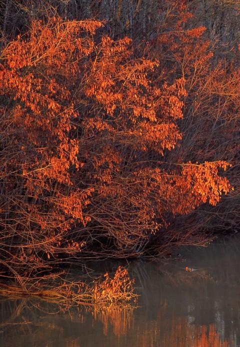 Soleil couchant sur le canal du Rhône au Rhin, vers Valdieu-Lutran, Alsace