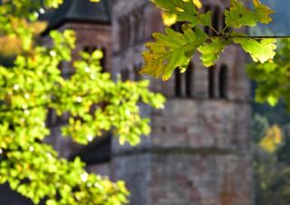 Ambiance d'automne, Murbach, Alsace
