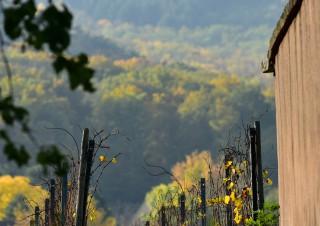 Château d'Andlau, Alsace  –  Le château depuis le vignoble de Mittelbergheim