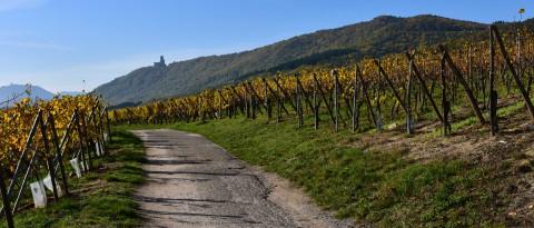 Château de l'Ortenbourg, Bas-Rhin, Alsace  –  Le château depuis le vignoble