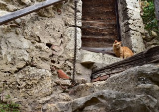 Chat gardien – Pérouges, Ain