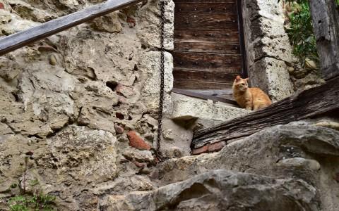Chat gardien – Pérouges, Ain