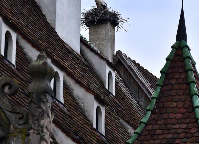 Cigogne sur la halle au blé d'Obernai